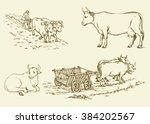 Cute Young Hoofed Dairy Buffal...