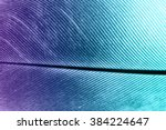 feather texture  | Shutterstock . vector #384224647