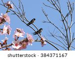 swallows and blossoming fruit... | Shutterstock . vector #384371167