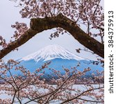 mt.fuji with cherry blossom at... | Shutterstock . vector #384375913
