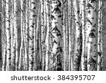 Birch Trees Trunks   Black And...
