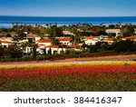 Flower Fields California
