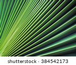 Sugar Palm Leaf Texture ...