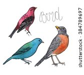 set of watercolor painting of... | Shutterstock . vector #384789697