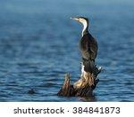 white breasted cormorant... | Shutterstock . vector #384841873