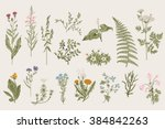 Herbs and Wild Flowers. Botany. Set. Vintage flowers. Colorful illustration in the style of engravings. | Shutterstock vector #384842263