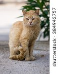 Stock photo cat on the street street cat red cat sitting cat very serious cat cat fighter close up cat 384942757