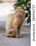 Cat On The Street. Street Cat....
