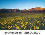Wildflower Super Bloom In...