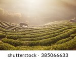 green tea field in doi angkhang ... | Shutterstock . vector #385066633