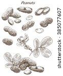 peanuts set of hand drawn... | Shutterstock . vector #385077607