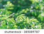 Fresh Healthy Green Bio And Ec...