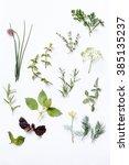 fresh herbs | Shutterstock . vector #385135237