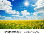 Field Of Sunflowers And Blue...