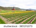 Windmill With Beautiful Tulip...