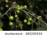 cherry | Shutterstock . vector #385250533