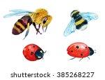 Bee  Wasp  Bumblebee  Ladybug ...