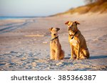 dogs terriers sitting on the...   Shutterstock . vector #385366387