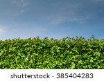 green wall. tall hedge  endless ... | Shutterstock . vector #385404283