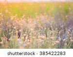 Blurred Grass With Evening Sun