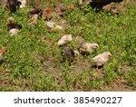 poultry | Shutterstock . vector #385490227