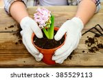 Woman Planting Flowers In Pots...