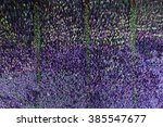 Wall Of Lavender Flowers  ...