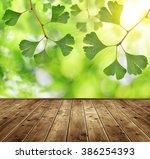 Ginkgo Biloba Leaves And Woode...