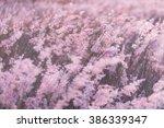 Blur  Flowers Grass In Meadow