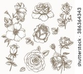 rose flower set. hand drawn... | Shutterstock .eps vector #386364343
