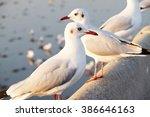 white seagull standing on the... | Shutterstock . vector #386646163