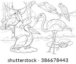 At the zoo. African animals. Small set of African birds. Cute flamingo, pelican, marabou, toucan and parrot. Illustration for children. Cartoon characters. Coloring book. Coloring page.
