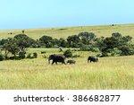 afrikanskfy elephant in their... | Shutterstock . vector #386682877