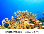 coral and tropical fish | Shutterstock . vector #38670574