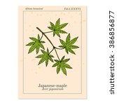 acer japonicum  amur maple ... | Shutterstock .eps vector #386856877