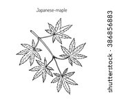 acer japonicum  amur maple ... | Shutterstock .eps vector #386856883