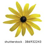 Bunch Of Black Eyed Susan ...