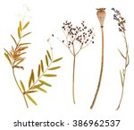 set of wild dry pressed flowers ... | Shutterstock . vector #386962537