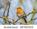 little robin bird is chirping... | Shutterstock . vector #387002323