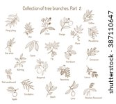 set of different tree branches. ... | Shutterstock .eps vector #387110647