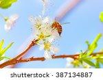 cute little bee pollinating... | Shutterstock . vector #387134887