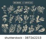 herbs and spices set. hand... | Shutterstock .eps vector #387262213