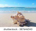 Conch Shells At The Beach ...