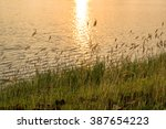 The Lakeside Grass On Sunset...