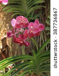 Small photo of Red vanda orchid, natural garden background.