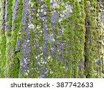 Moss On A Tree Bark
