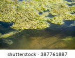 Small photo of green algae patterns on the water