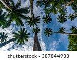 Palm Trees In Jardim Botanico ...