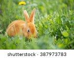 Rabbit Outdoor