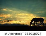 Silhouette Of A Horse Grazing...